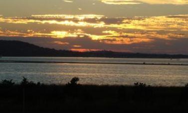 seagulls nest sunset